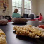 Η μυστηριώδης προέλευση του καλαμποκιού, Βίντεο – Σχέδιο μαθήματος