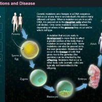 Ασθένειες και Γενετικές Μεταλλάξεις