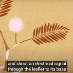 Μηχανισμοί άμυνας στα φυτά