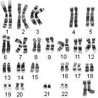 Karyotype Lab