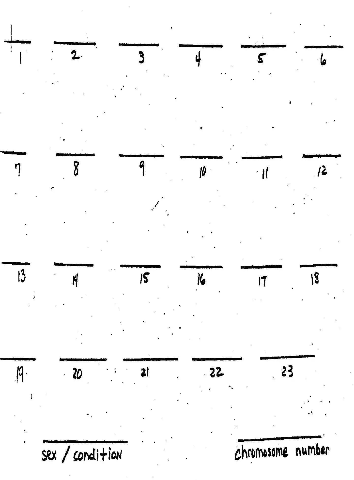 Karyotype Background