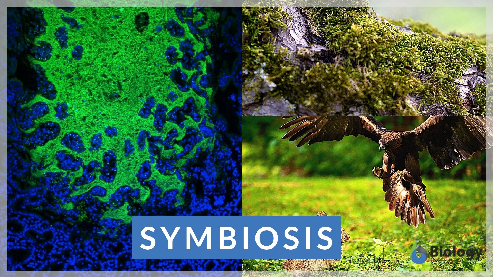 Symbiosis Definition And Examples