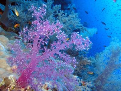 Regalos del Mar para tu Belleza y Salud