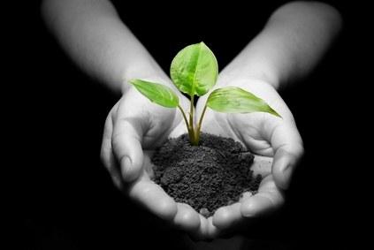 Aumenta el número de cultivos ecológicos en el Reino Unido