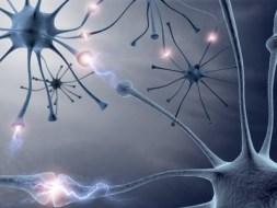 Las Emociones y la salud de tu Sistema Nervioso