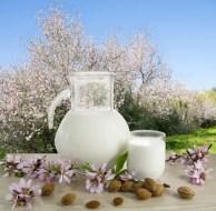 Leche de almendras contra osteoporosis, obesidad, problemas de piel, rejuvenecer