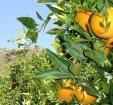 Garantías de control en Agricultura Ecológica
