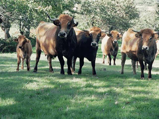 La Agricultura Ecológica será el modelo a seguir por la agricultura europea