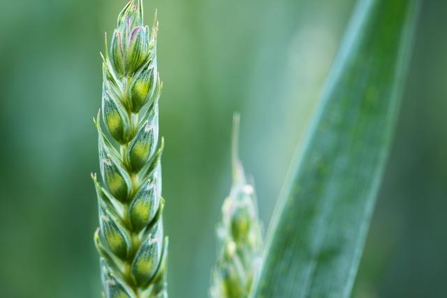 Primer centro andaluz dedicado a la producción de semillas ecológicas