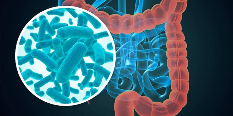 新發現 帕金森氏症關鍵在於腸道?