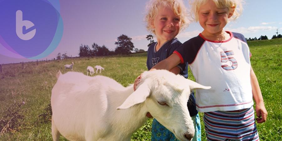 羊奶提升保護力的關鍵成份