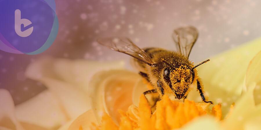 蜂蜜能幫助人類製造塑膠替代物?!改善塑膠汙染問題!