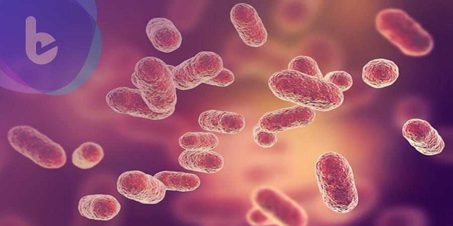 益生菌與抗生素合作 可有效殺死兩種「超級細菌」