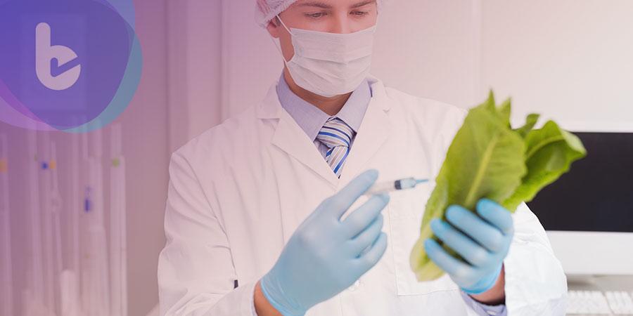 美科學家: 在萵苣中培養的關鍵物質有望加速糖友骨折癒合