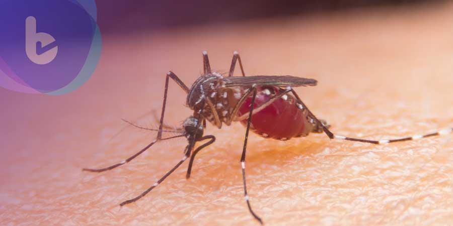 蚊子也會傳播新冠病毒嗎?一次搞懂蚊子的生活型態