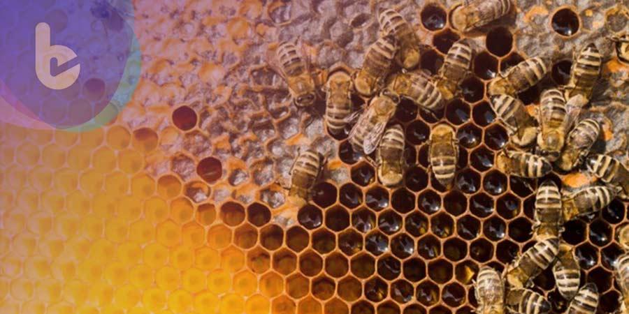 外國研究證實:蜜蜂毒素可用於抑制惡性乳腺癌細胞