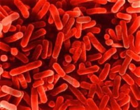 Klasifikacija Proteobacteria Bionet Kola