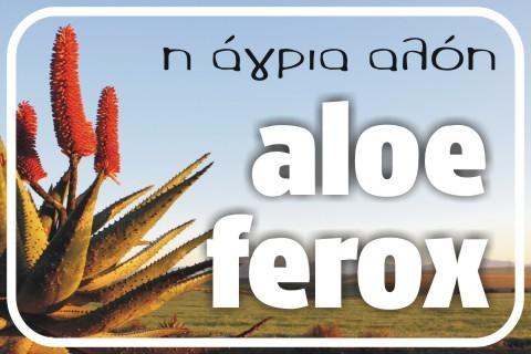 aloe-ferox