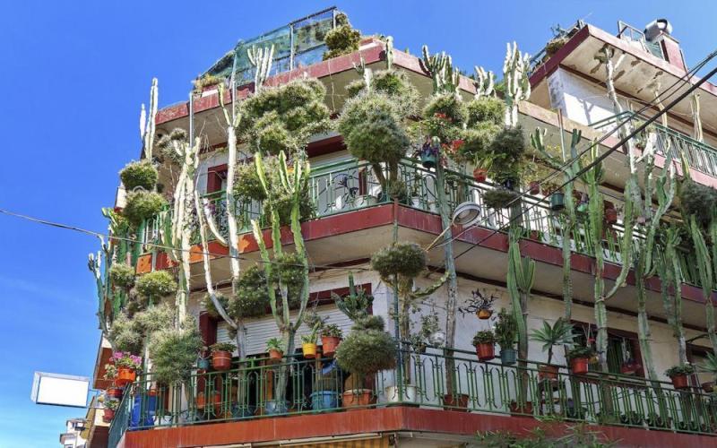 Plantes dépolluantes pour un habitat écolo