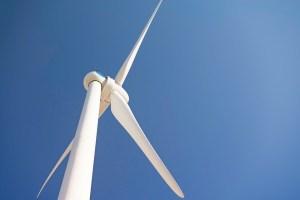 Comprendre l'écologie et le développement durable