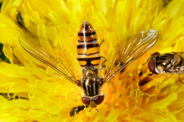 Foto's/beelden van Insecten