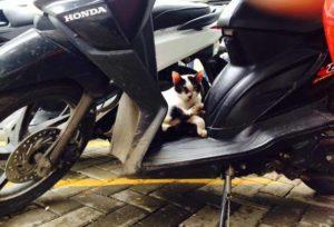 Rekomendasi Merk Pengkilap Body Motor Yang Tidak Merusak Cat