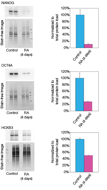 fig-02a-effect-on-the-mrna-and-protein-levels-03