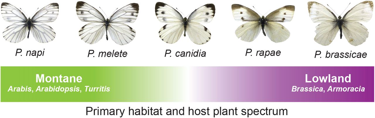 Molecular Signatures Of Selection Associated With Host Plant