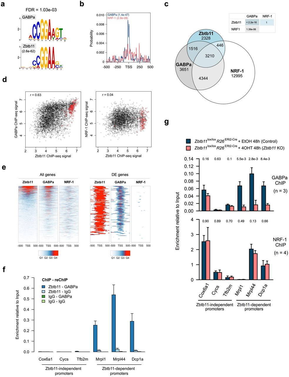 Intellectual Disability Associated Factor Zbtb11 Cooperates With