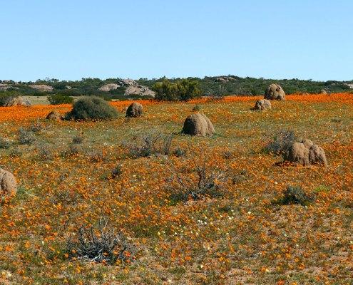 Reisebericht - Namaqualand 2016