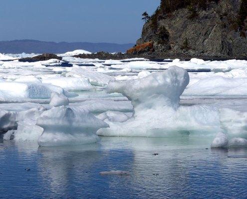 Reisebericht - Neufundland 2014
