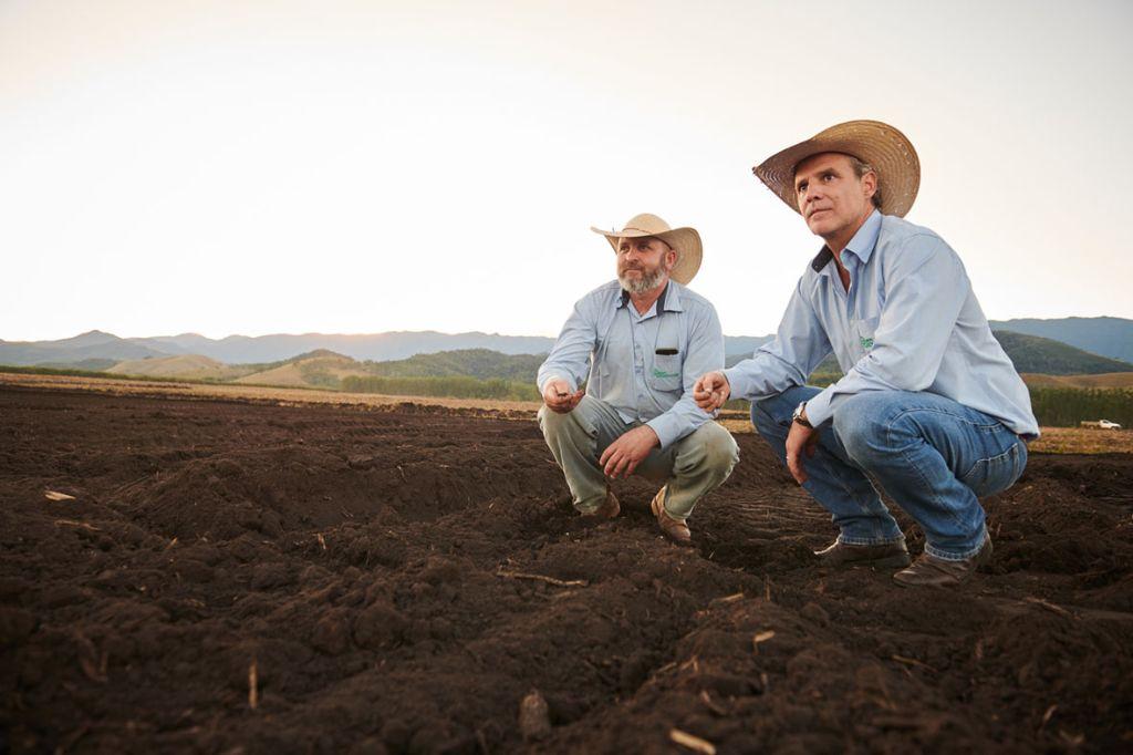A Fazenda Roncador conta com mais de 400 funcionários. (Foto tirada na unidade da Serra da Mantiqueira, no Estado de São Paulo)