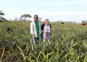 José Cícero e a esposa, Maria Julia, na plantação de abacaxi da família.