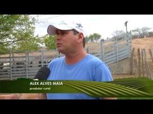 Produtor atendido pelo IBS e pelo Sebrae RN é destaque no Inter TV Rural