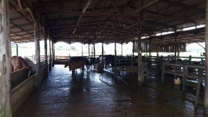 Instalações da fazenda do produtor José Sena Castro.
