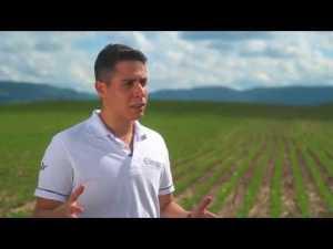 Vídeo apresenta como funciona o Programa 3S nas unidades produtoras de soja