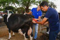 Pacotes do Leite e Genética incluem assistência e consultoria de veterinários especialistas do IBS. Foto: Moraes Neto /Sebrae RN
