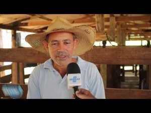 Programa Leite com Qualidade estimula os pequenos negócios em Rondônia