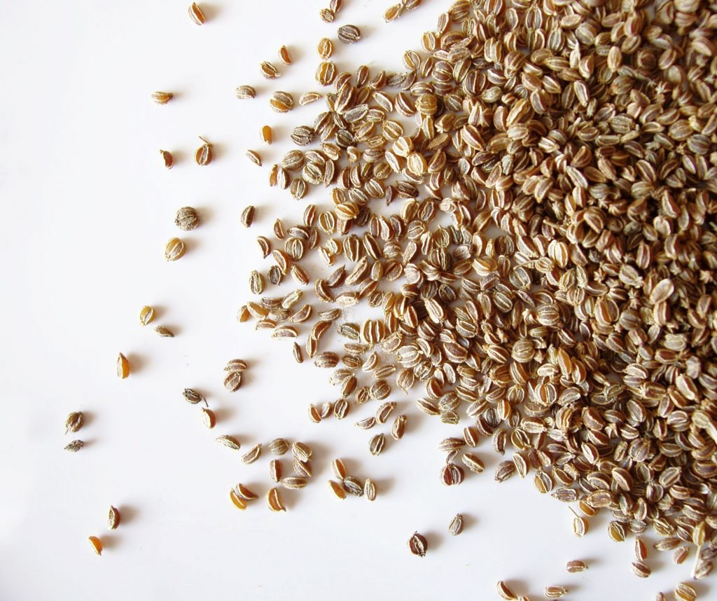 Celery Seed Essential Oil Uses And Benefits