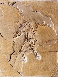 skeleton of the iconic dinosaur Archaeopteryx. Images courtesy Museum für Naturkunde Berlin
