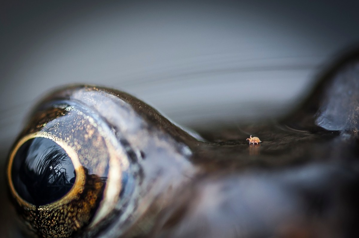 Chris Speller / BWPA
