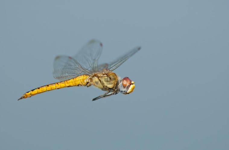 zz dragonfly Greg Lasley