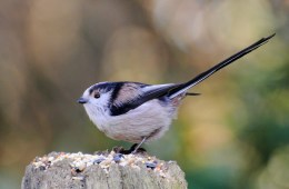Big Garden Birdwatch Results 2016