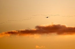 Bird-aircraft collisions avoided with new tech