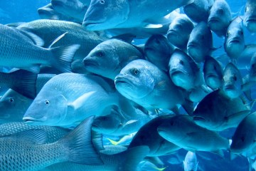 Fish personalities shaped by social interaction