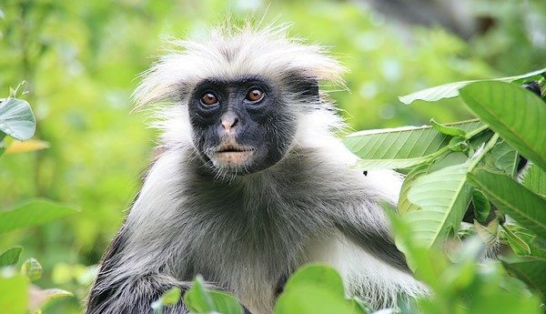 Hunting primates on a pristine island