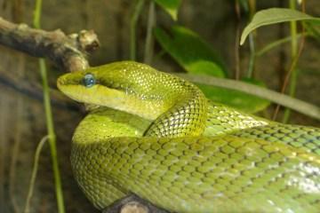 snake vision