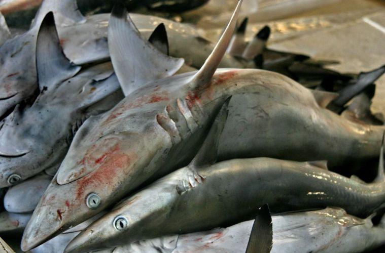 shark-market.jpg?resize=759,500