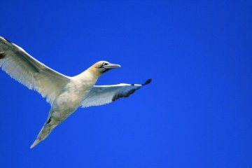 Atlantic seabird hot-spot
