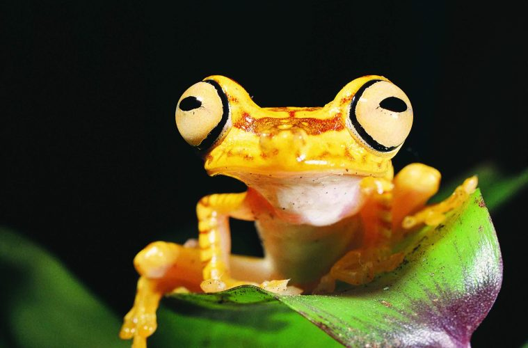 The world's vertebrate populations, which includes all mammals, bird, fish, amphibians and reptiles, have decreased by 58% in just over 40 years.
